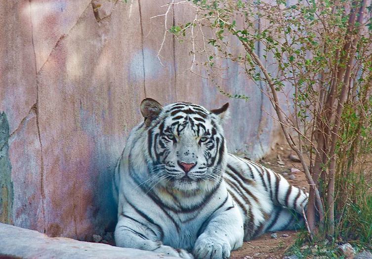 Зоопарк в Шардже описание фото контакты гиды экскурсии